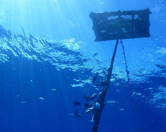 El sector atunero congelador español impulsa una pesquería sostenible y responsable.