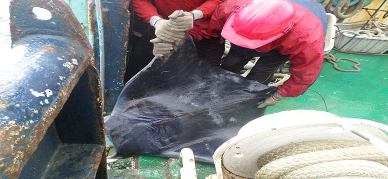 El sector atunero congelador español continúa impulsando una pesquería sostenible y responsable