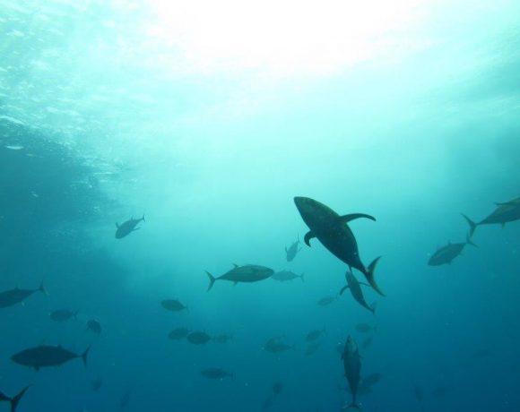 Organismos internacionales de gestión pesquera