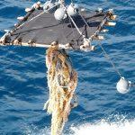 El proyecto BIOFAD: búsqueda de soluciones para mejorar la sostenibilidad de la pesca. Entrevista
