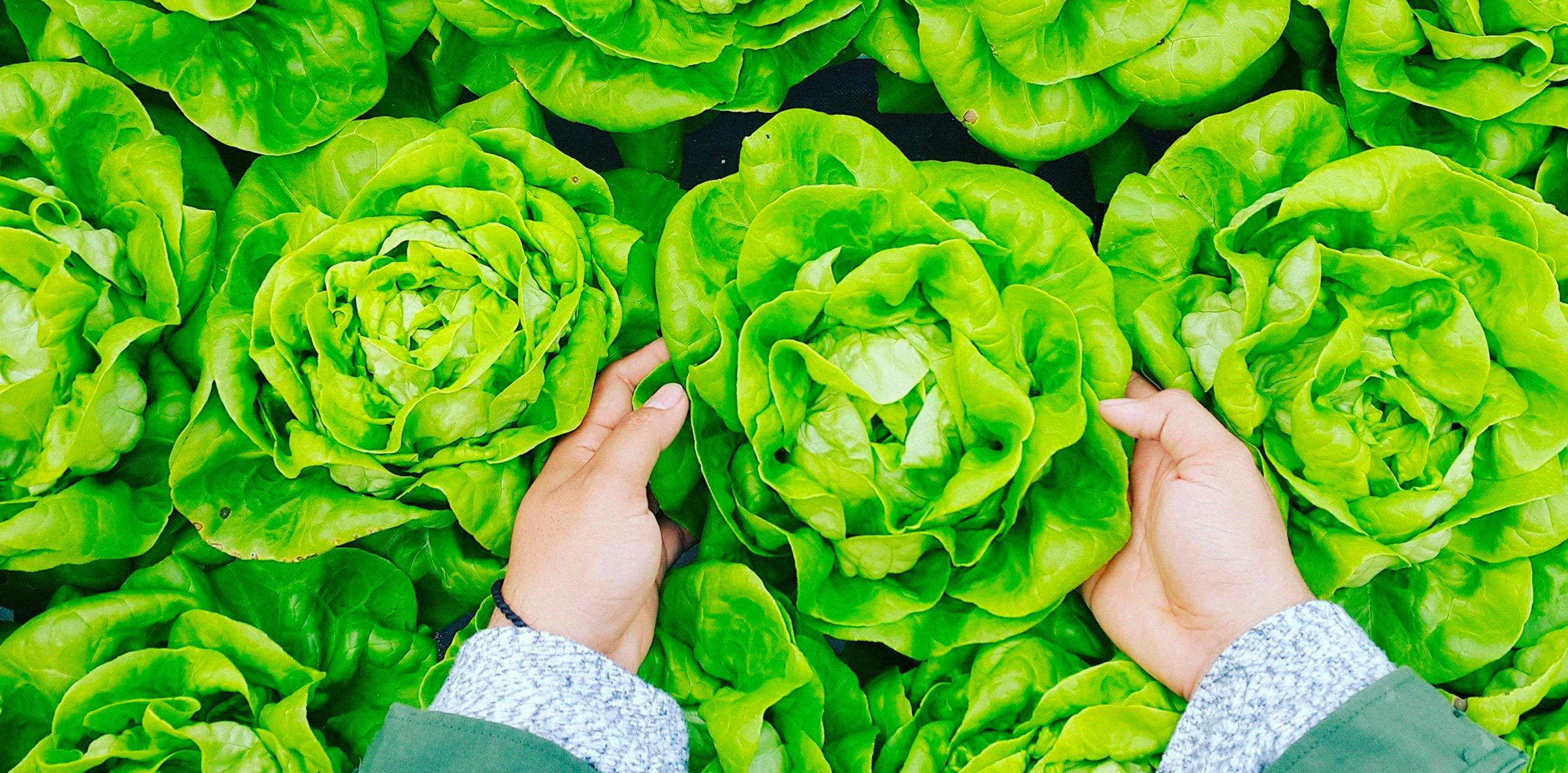 lechuga-mano-verde-alimentacion-salud-azti-2400x1183
