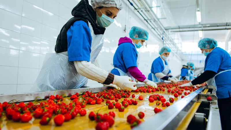 sector primario manipulacion comida