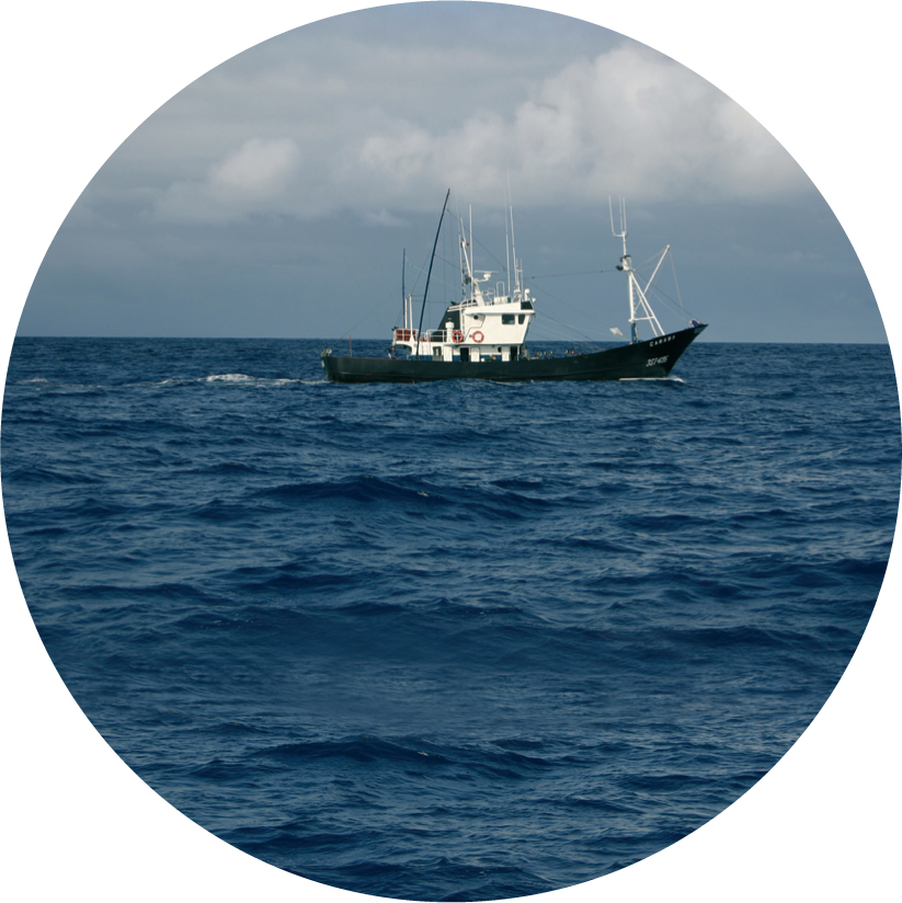 Servicios marina