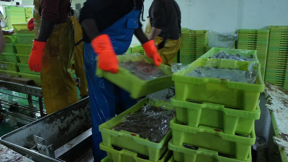pescado en punto de primera venta