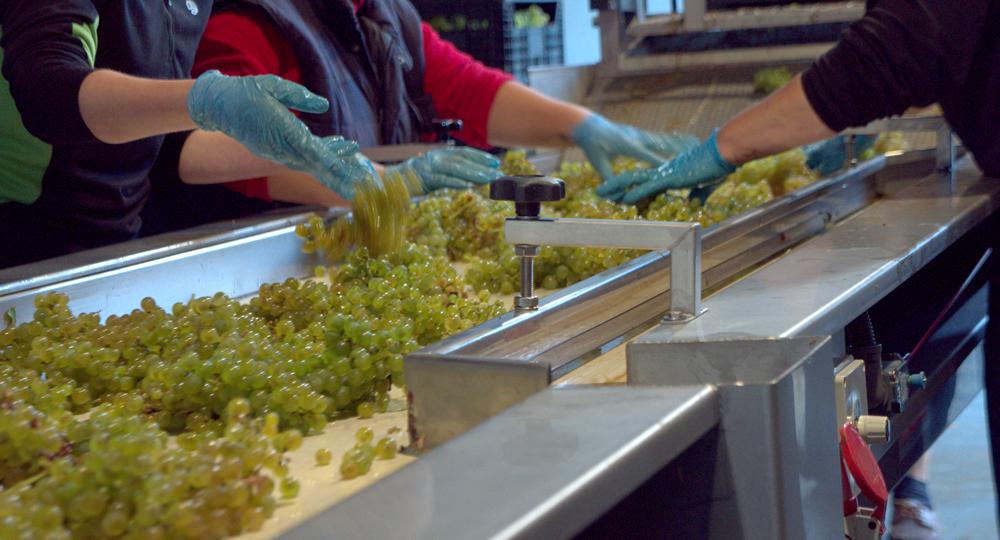clasificacion uva