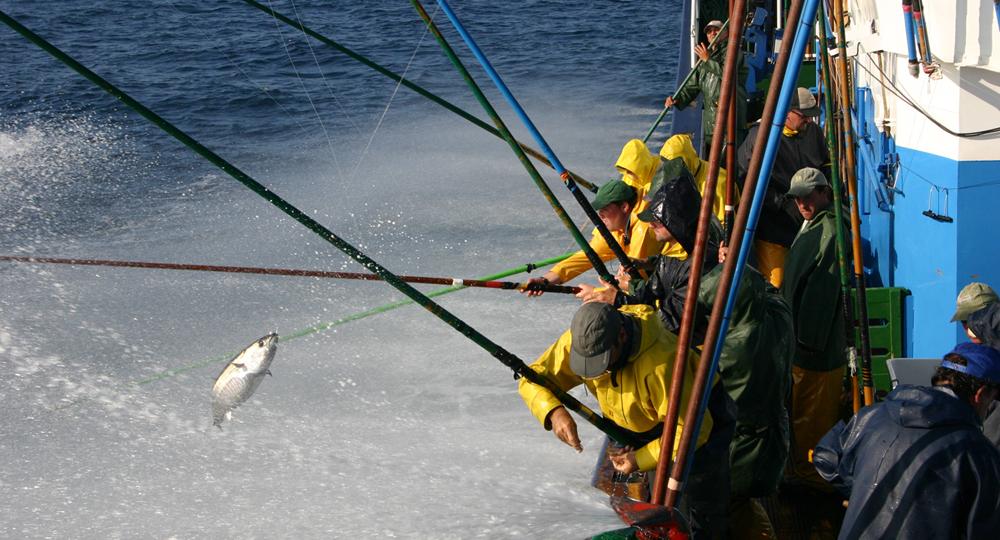 pesca de bonito con cana