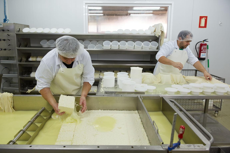 Making cheese from sheeps milk Latxa