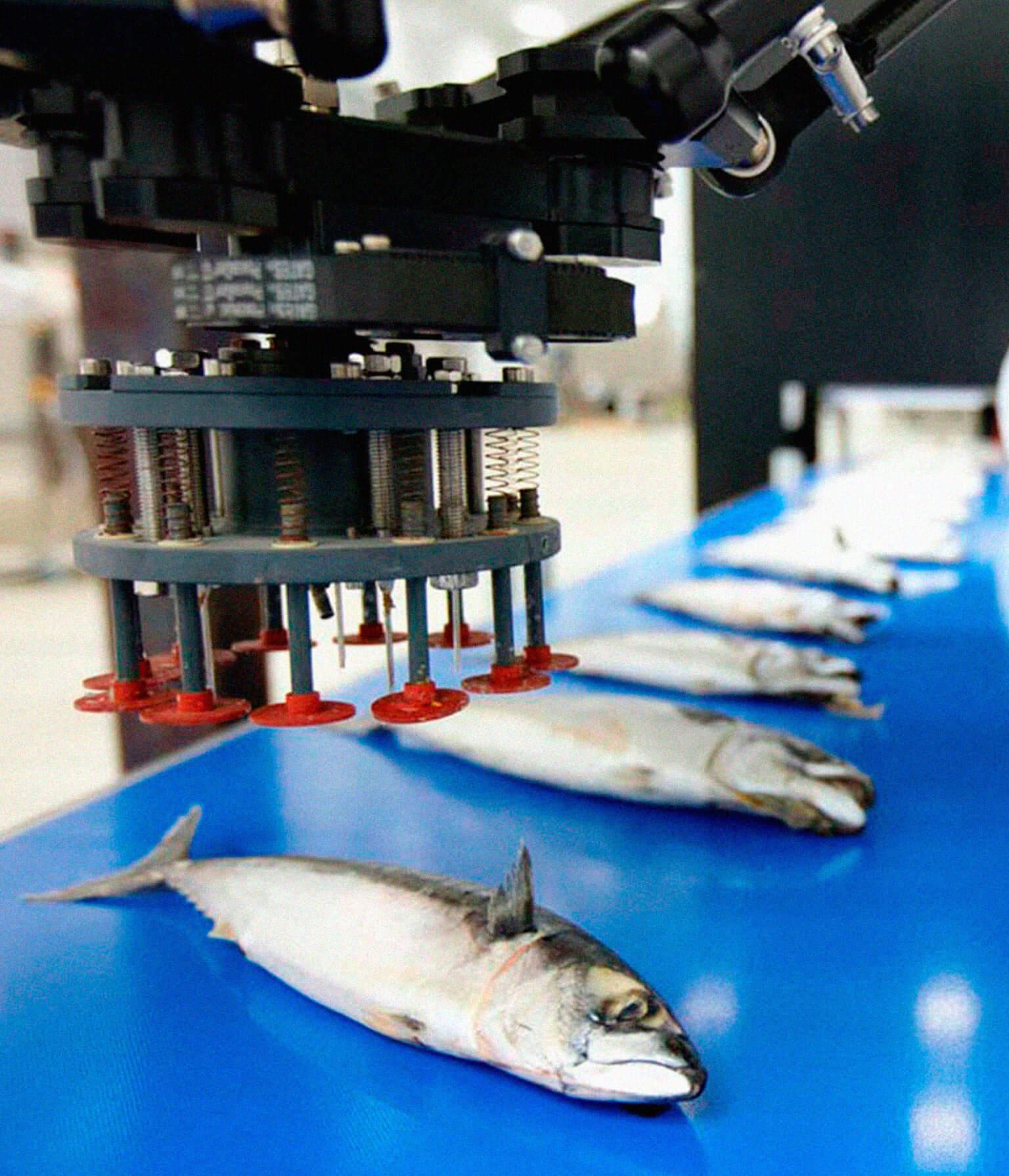 tecnologías visión artificial industria alimentaria