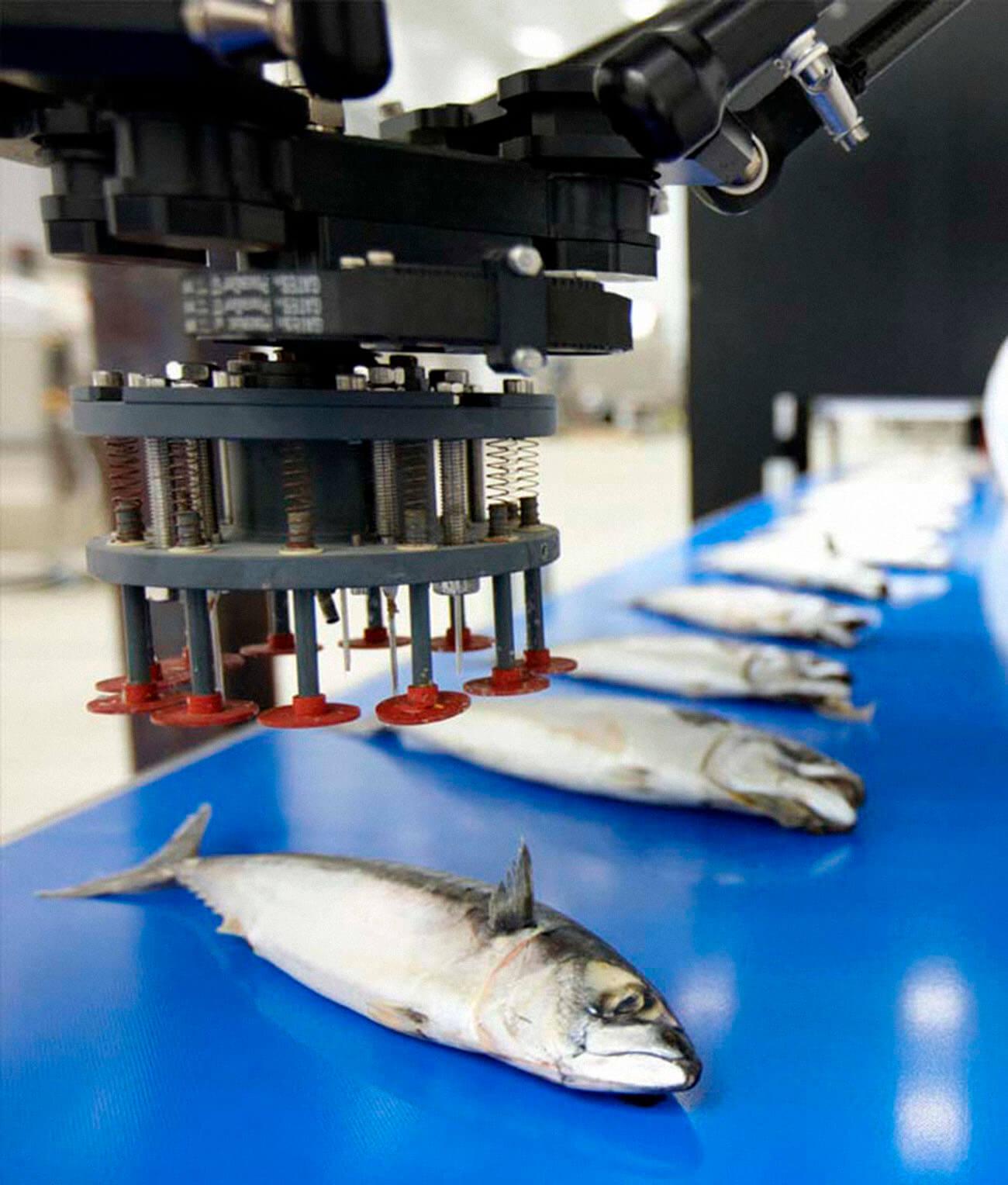 tecnologías visión artificial para la cadena alimentaria