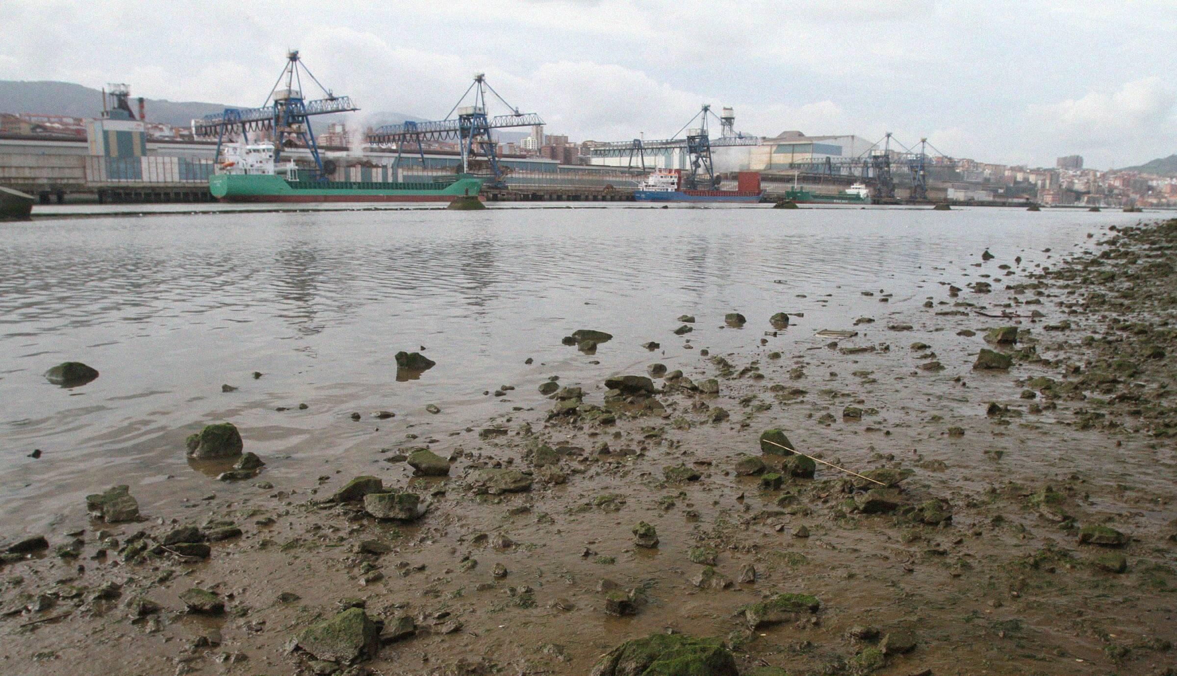Estudios de impacto de la contaminación marina