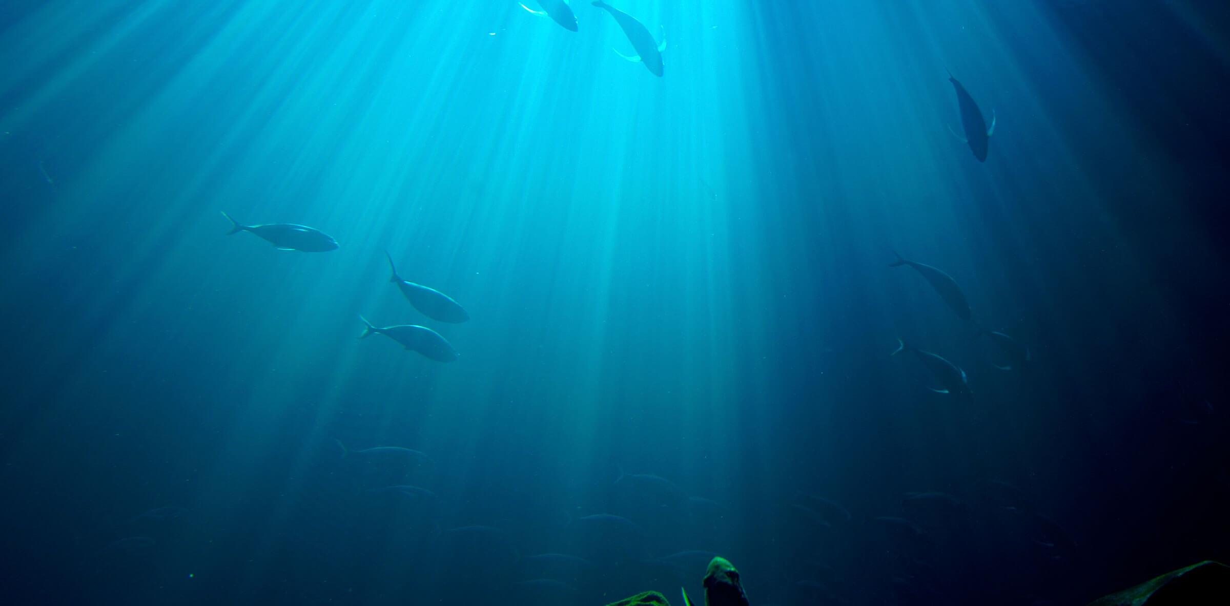 Peces nadando en el fondo del mar