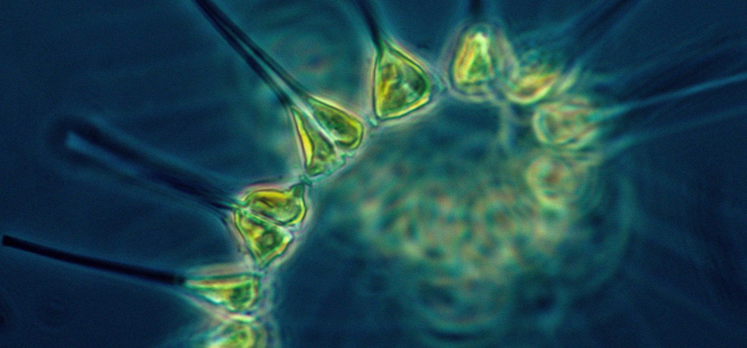 evolución del ecosistema marino