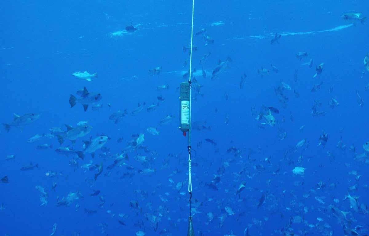 recuperación del ecosistema acuatico marino