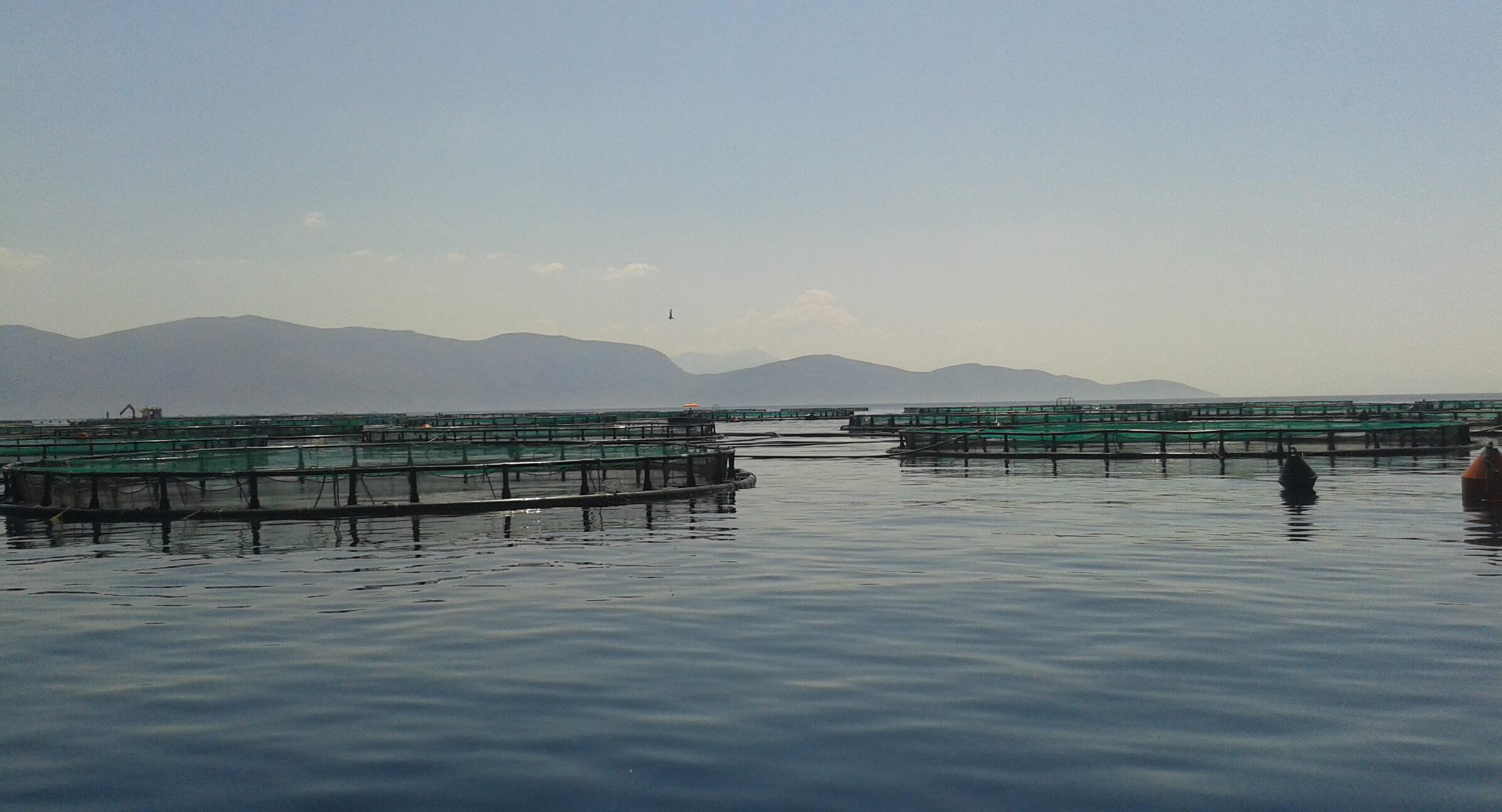 acuicultura_mediterraneo