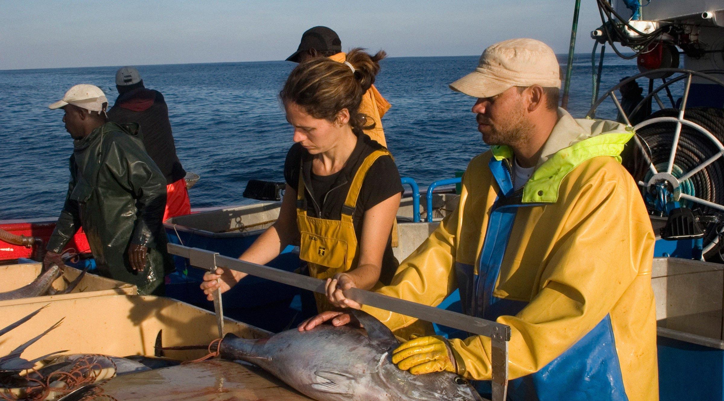 gestión pesquera sostenible de atunes. Marcadp