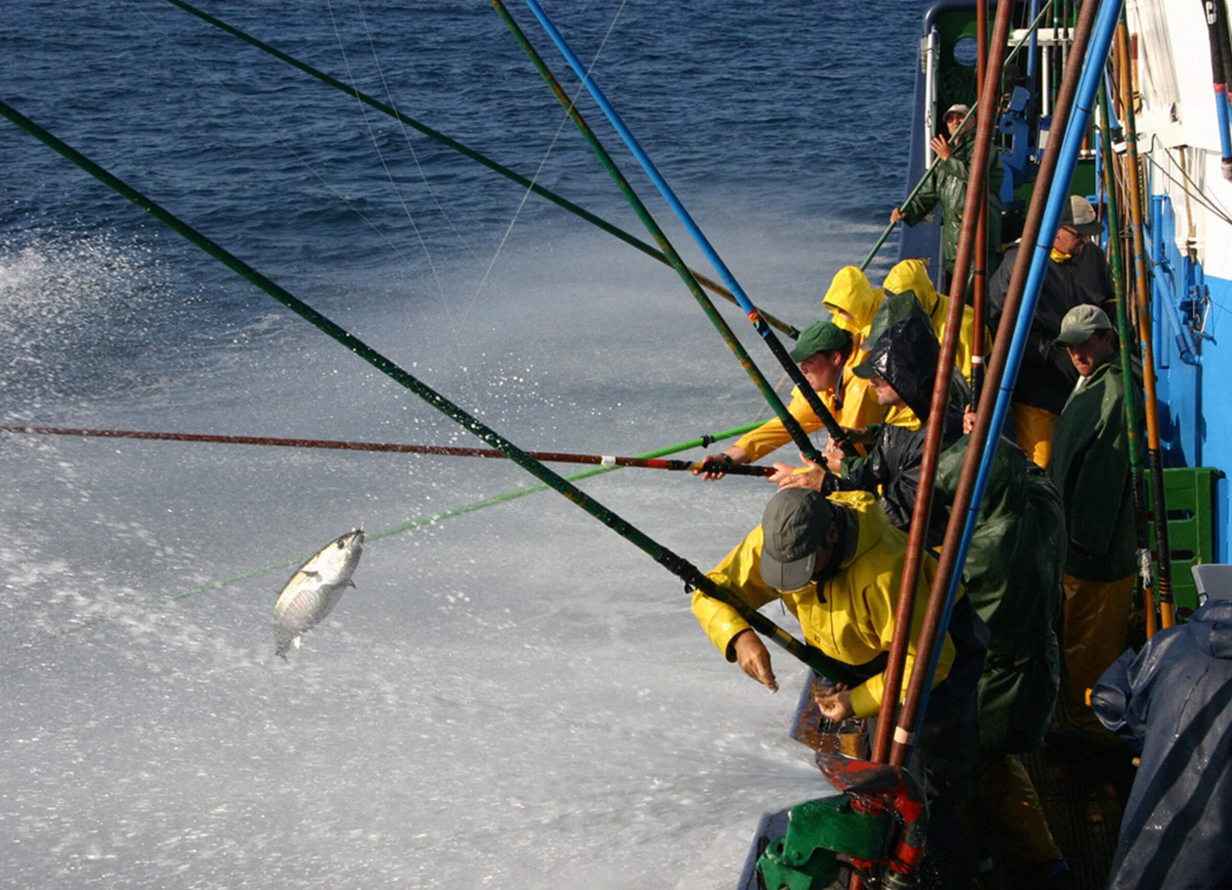 predición operacional de bonito. Gestión pesquera sostenible