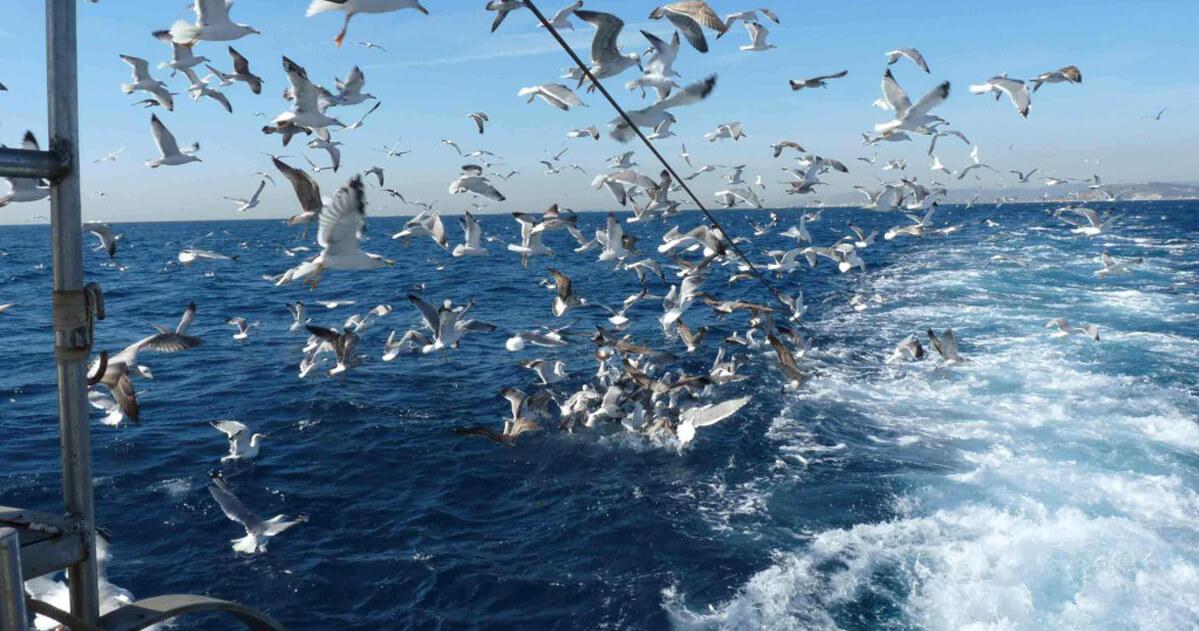 pajaros sobrevolando red de pesca
