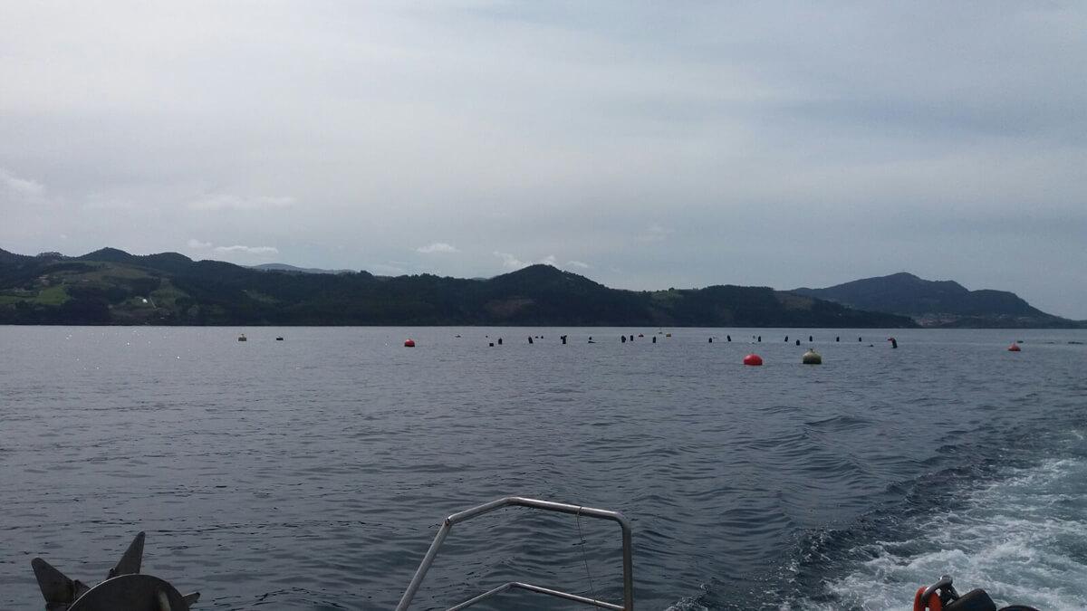 acuicultura longline