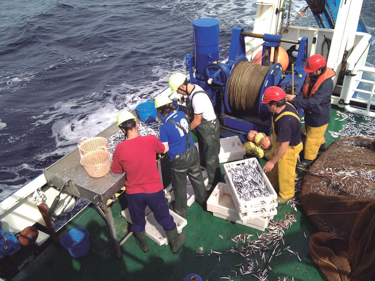 pesca de anchoa