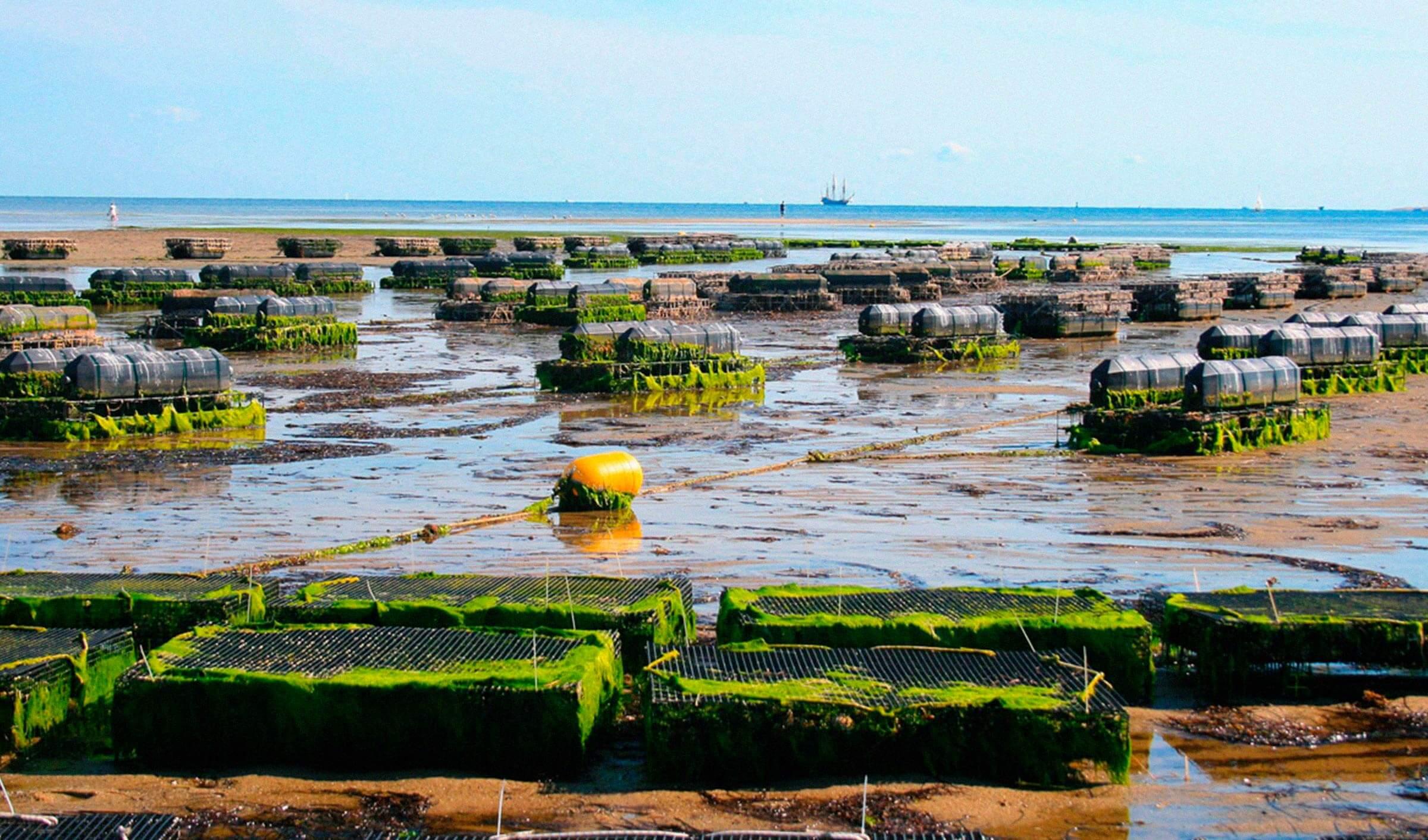 mejora ambiental acuicultura