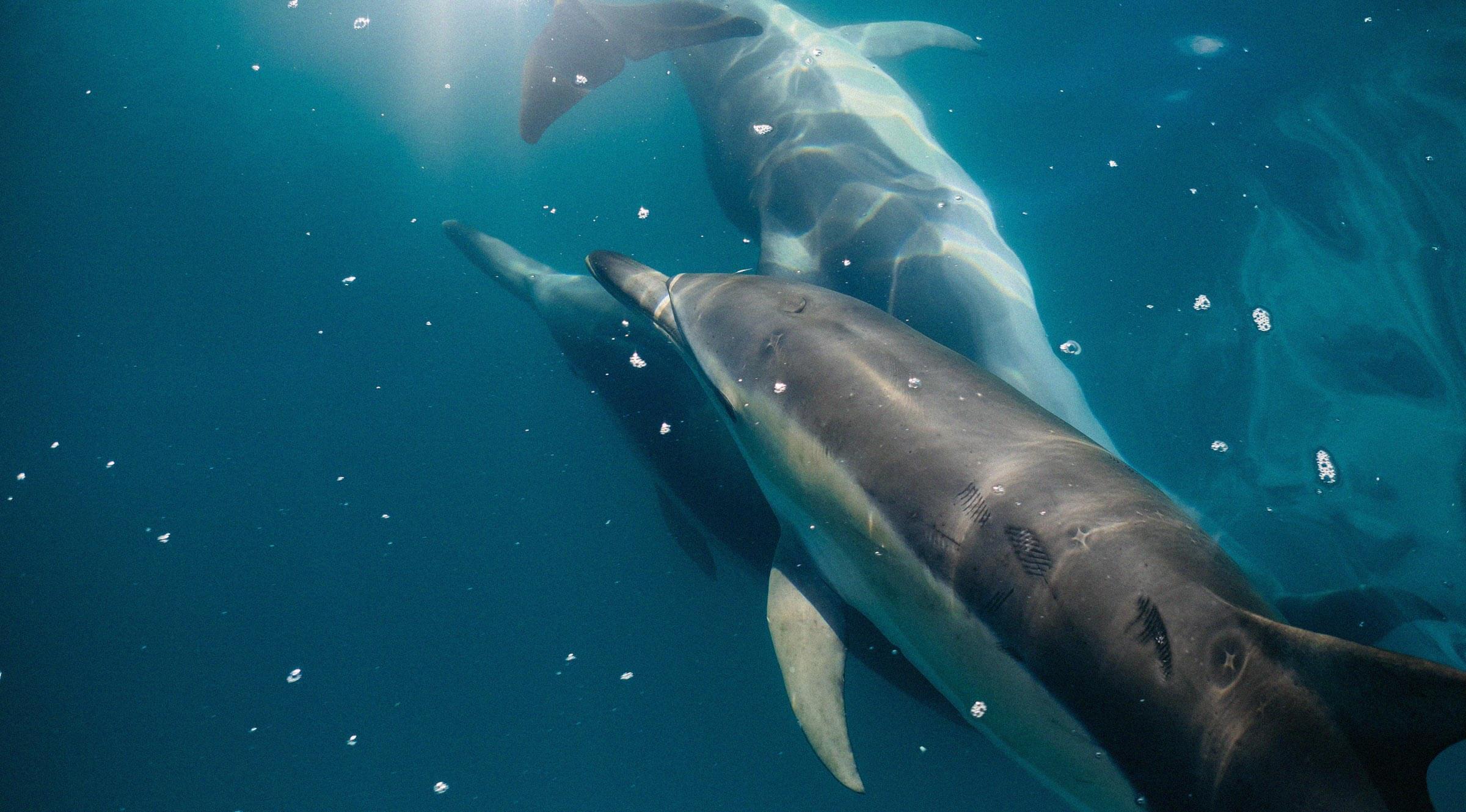 Conservar y gestionar de forma sostenible los océanos, los mares y los recursos marinos