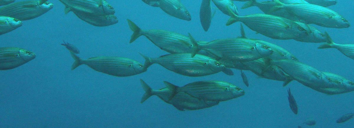 control de parásitos en peces de acuicultura