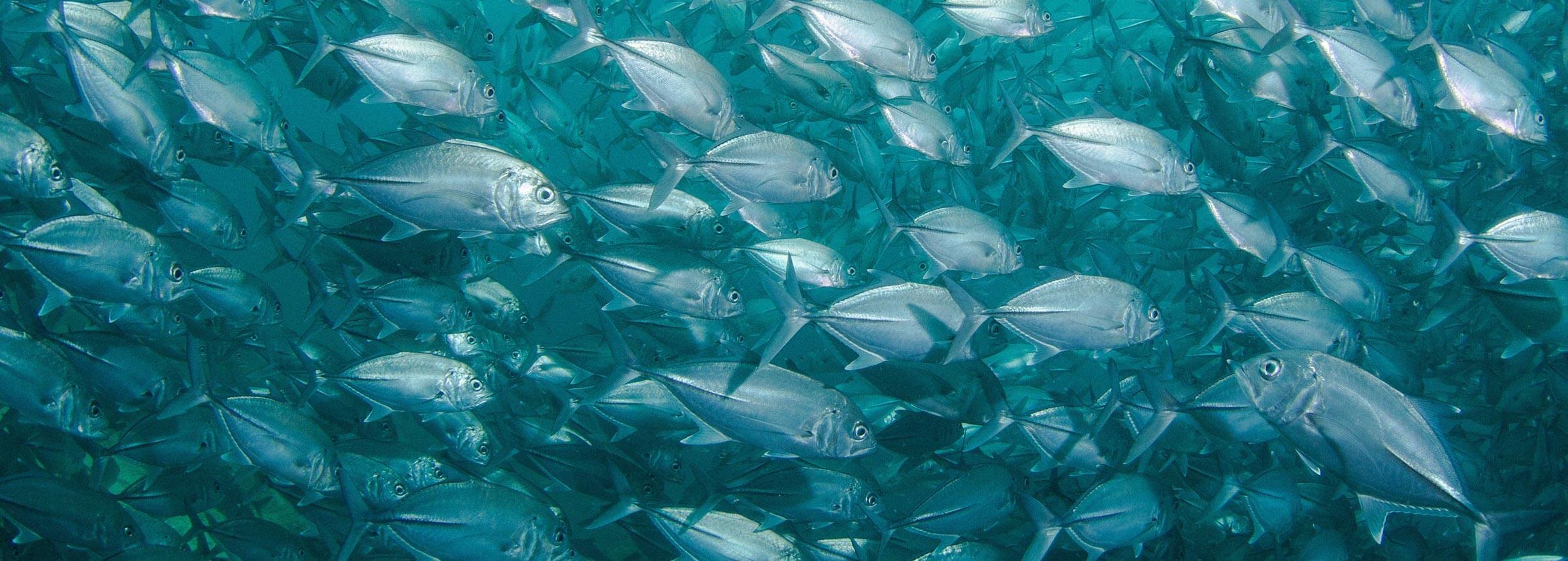 pesca especies vida submarina
