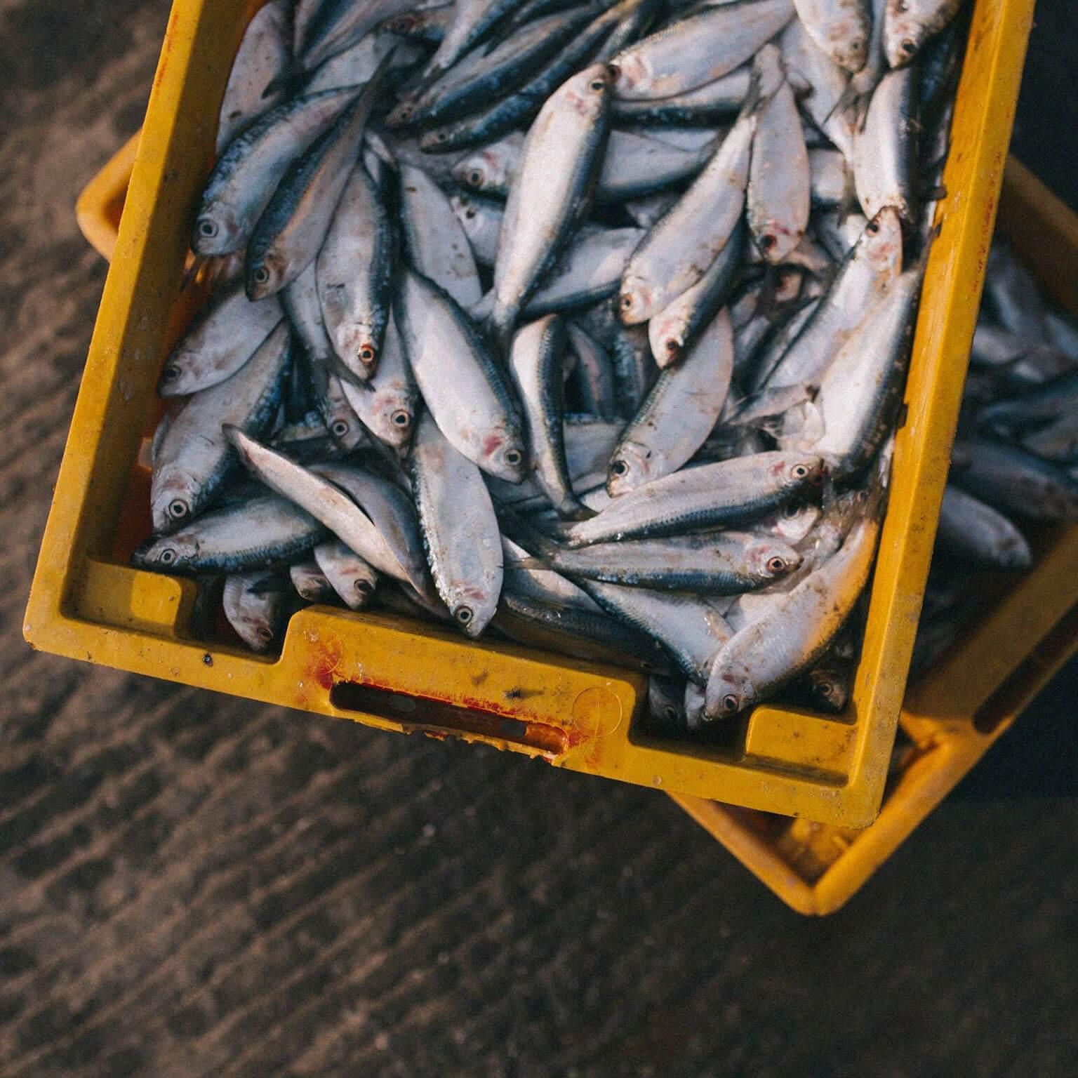 pescado-produccion-consumo-responsables-azti