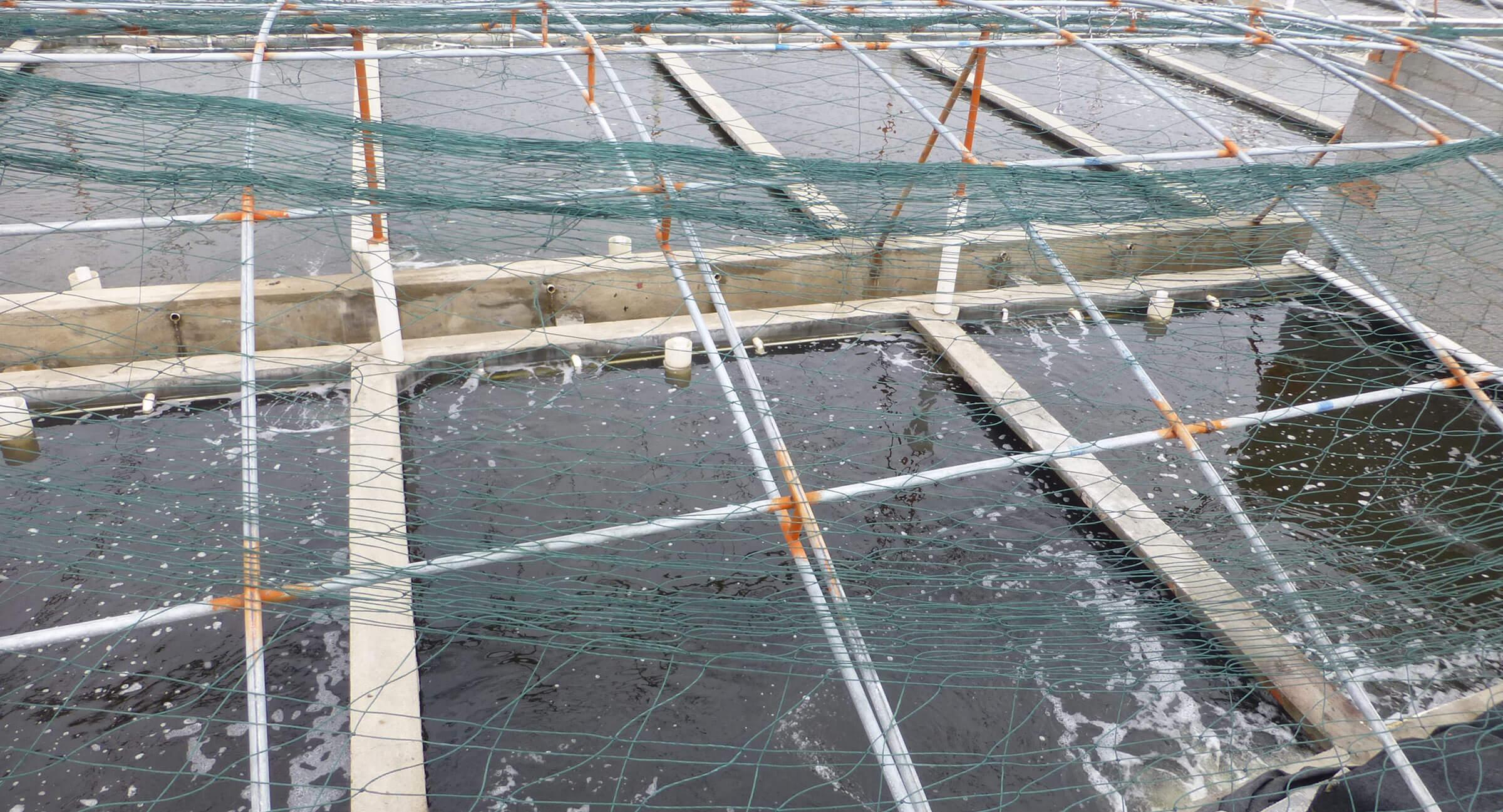 acuicultura, alternativas para cubrir la creciente demanda de pescado.