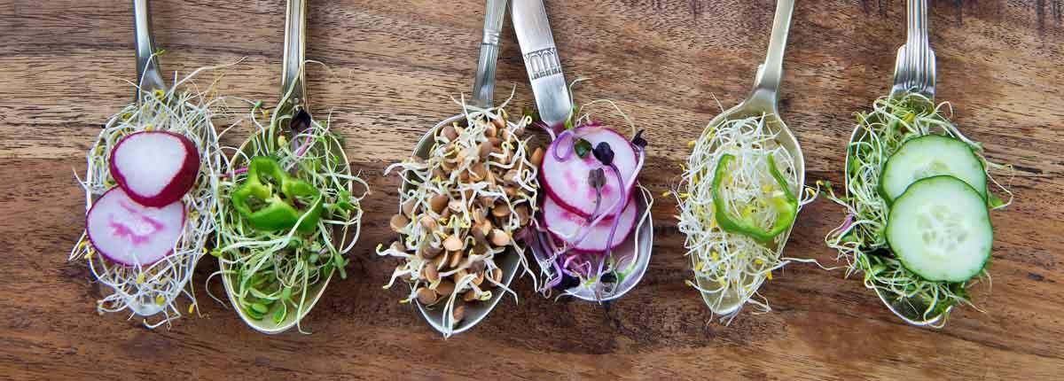 comida saludable en cucharas