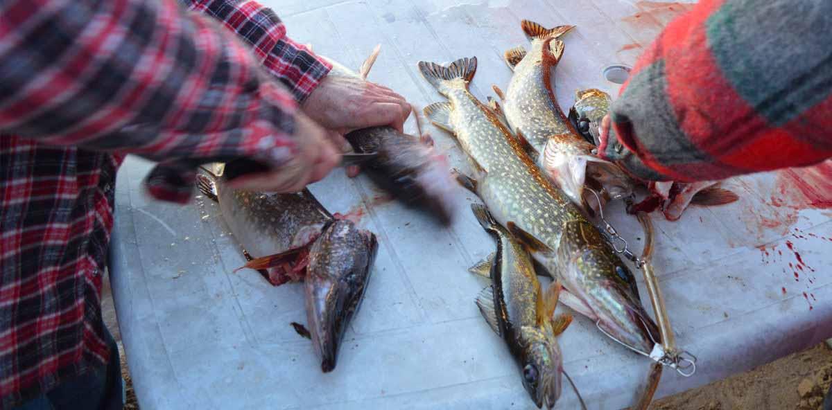 subproductos pesqueros