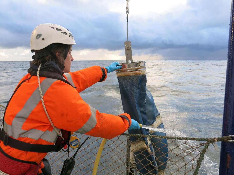 campana bioman stock anchoa