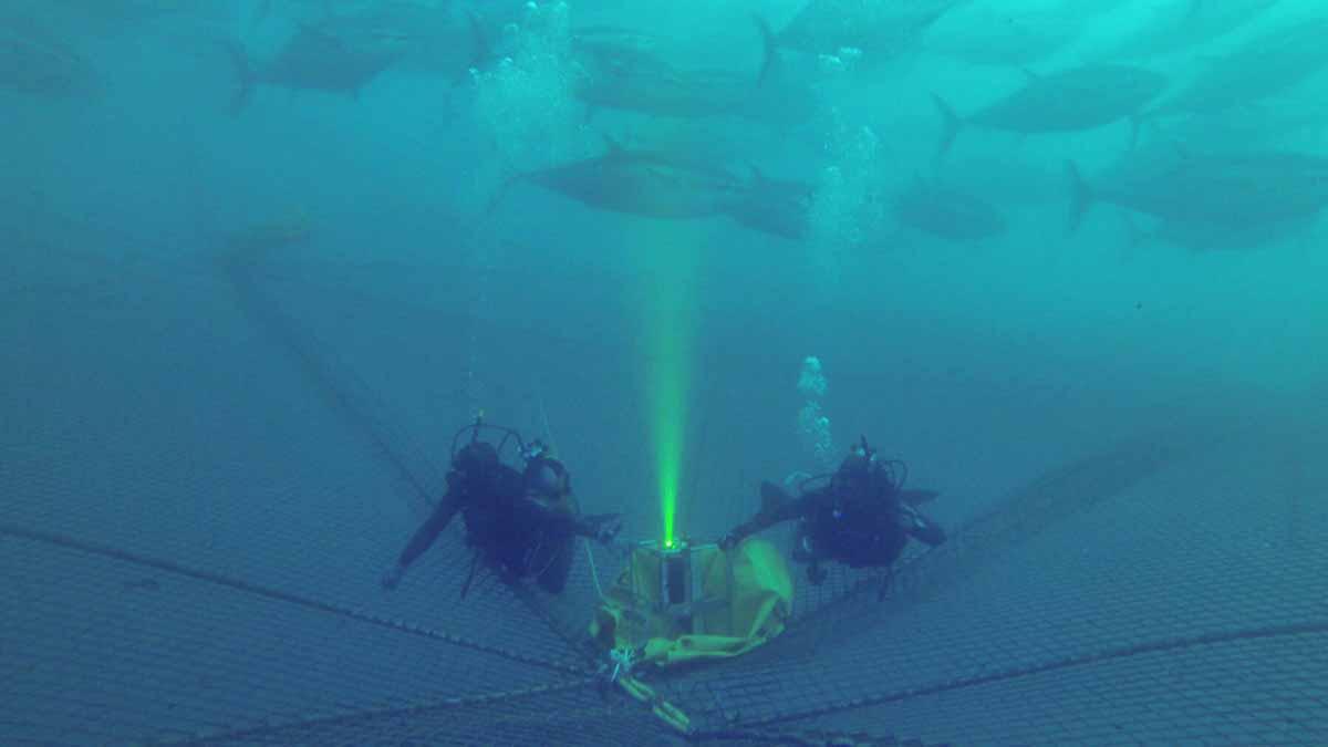 camara submarina para la pesca sostenible