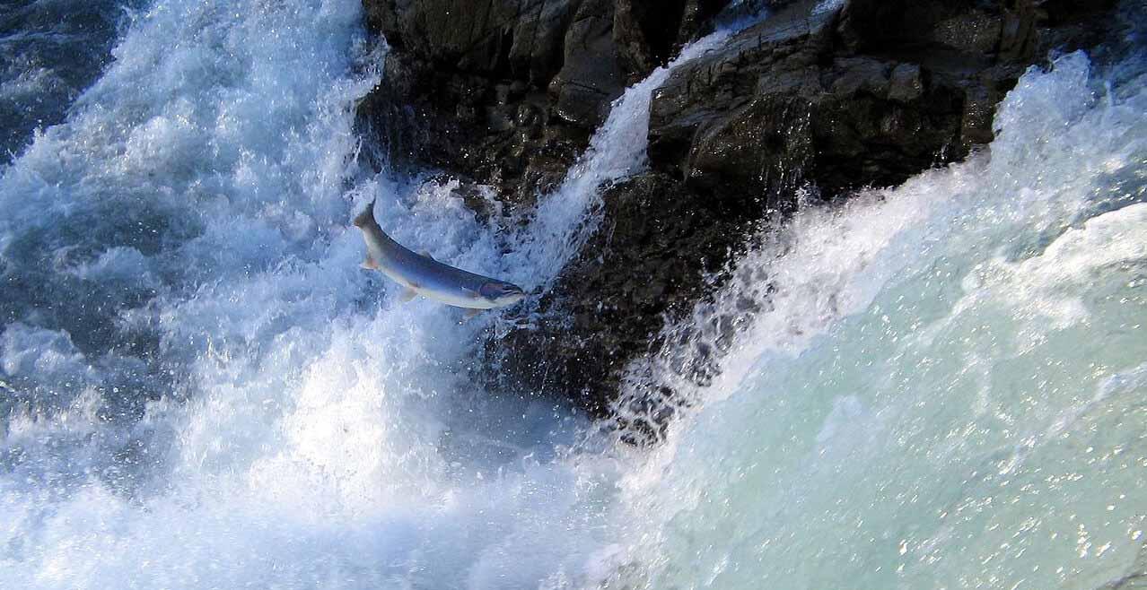 Servicios ecosistémicos peces diádromos