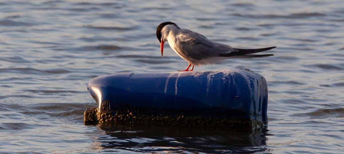 ave sobre botella de plastico en el mar