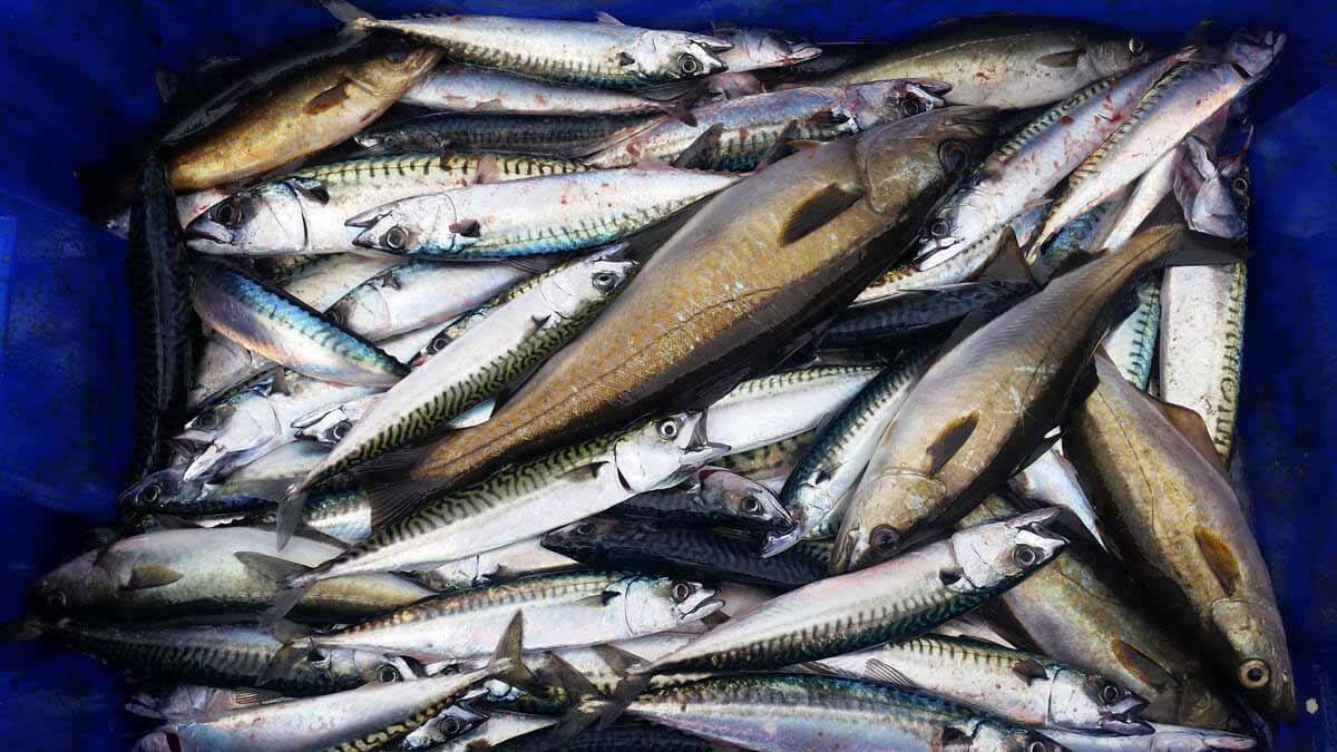 abundancia-pescado