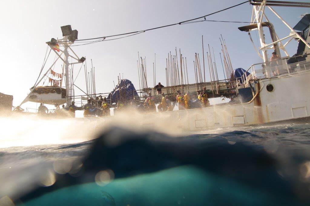 marcado de atunes para mejorar la gestion pesquera
