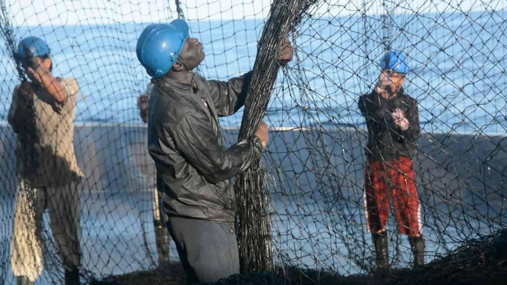 pescadores con redes para mejorar la sostenibilidad de la flota atunera