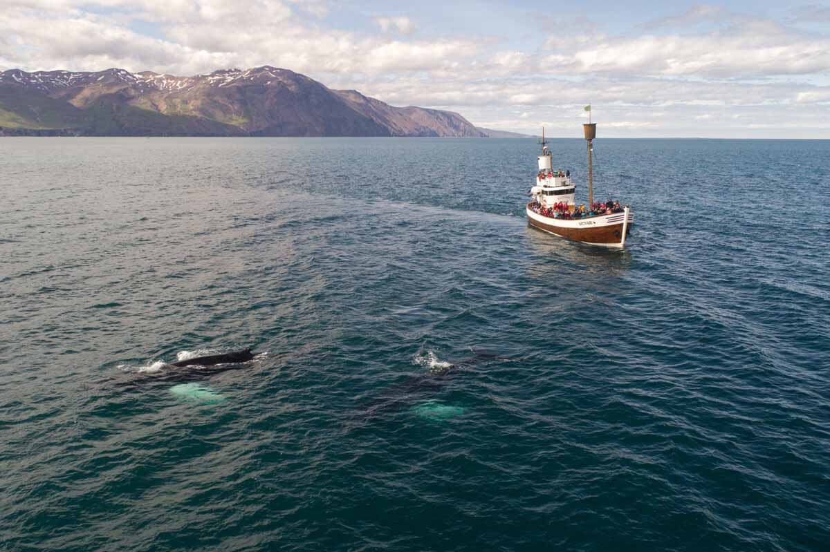 tourist-boat-and-whale-in-sea-not-far-from-shore
