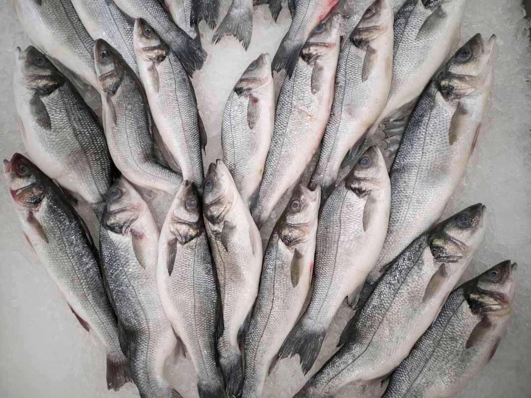 peces cadena de valor pesquera sosntenible