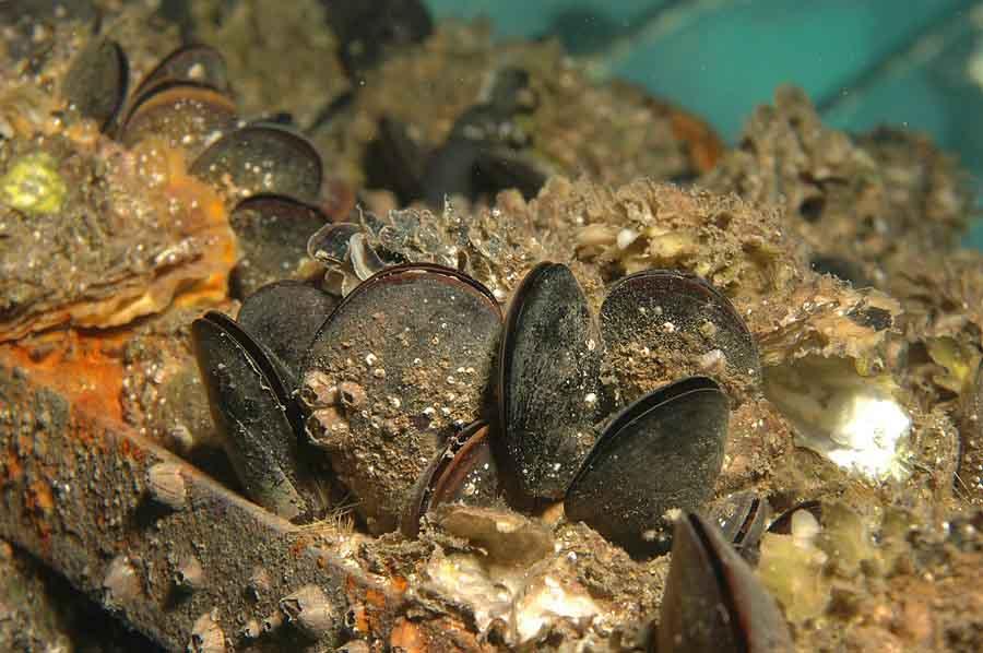calidad-aguas-cultivos-marinos-moluscos