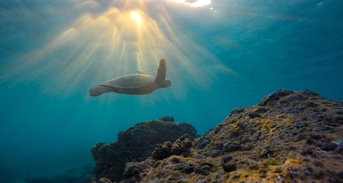 Cambio climático mar