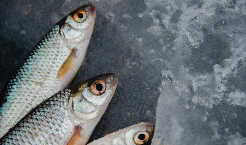 bioeconomía marina