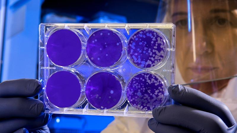bacteriofagos aplicacion Alimentacion