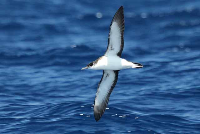 Conservación de especies protegidas Red Natura 2000