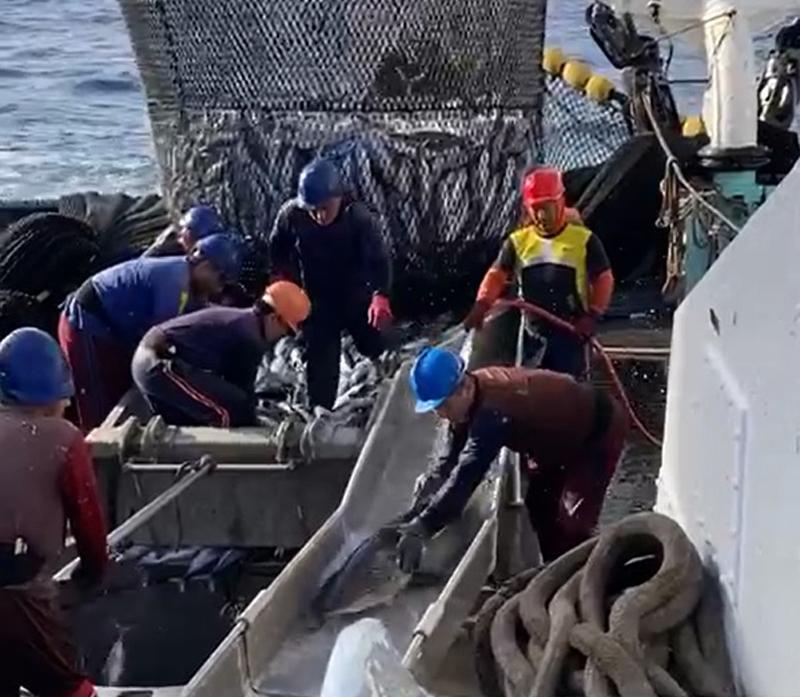 pesca con tecnologia hopper mas sostenible para minimizar la captura accidental de especies vulnerables