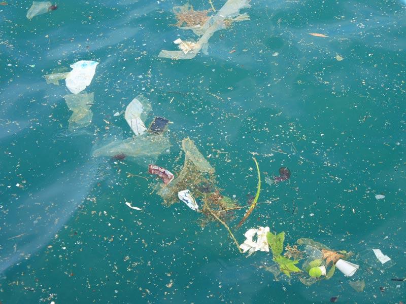 lineas de contaminacion marina
