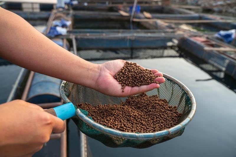 economia circular de subproductos para acuicultura