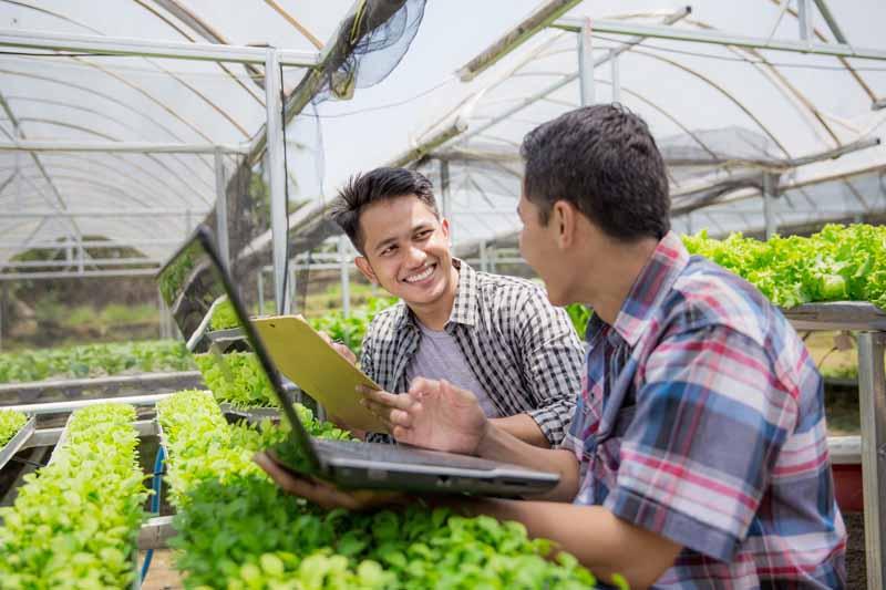 Inteligencia artificial pymes agroalimentarias
