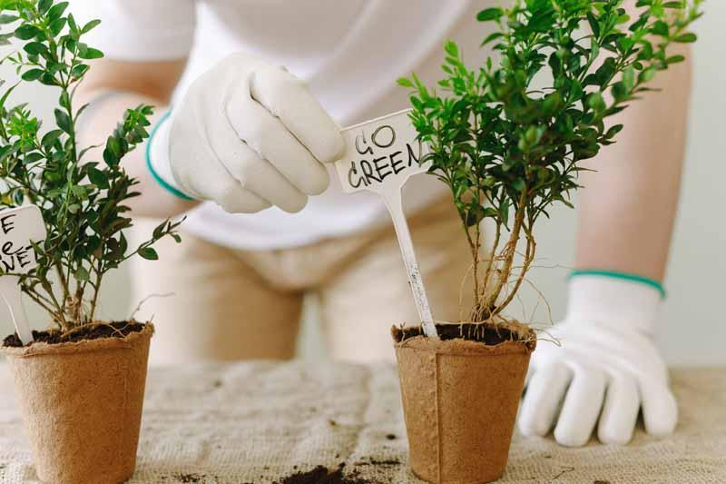 proteínas alternativas sostenibilidad allimentaria